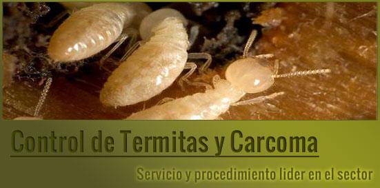 Fumigalia control de plagas for Carcoma o termitas