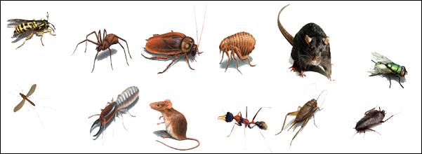 Fumigalia control de plagas - Plaga hormigas en casa ...